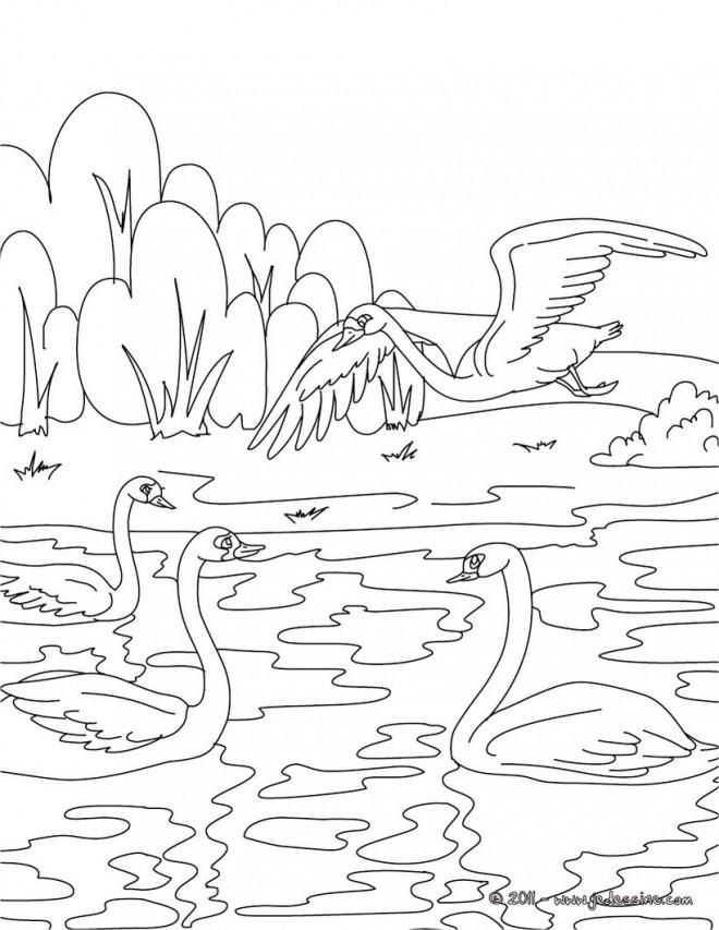 Coloriage et dessins gratuits Beau dessin des Canards sur la rivière à imprimer