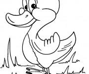 Coloriage dessin  Canard 5