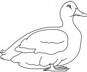 Coloriage Canard blanc