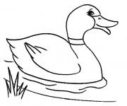 Coloriage et dessins gratuit Canard dans la rivière à imprimer