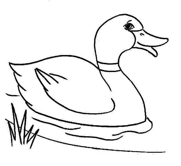 Coloriage et dessins gratuits Canard dans la rivière à imprimer