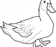 Coloriage et dessins gratuit Canard dessin des animaux à imprimer