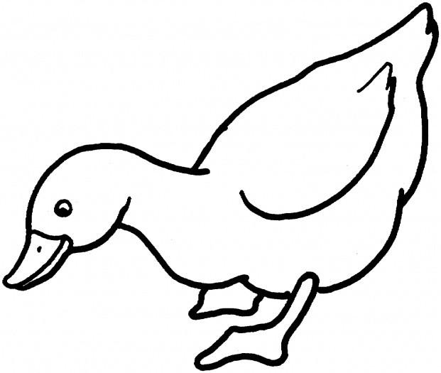 Coloriage et dessins gratuits Canard en ligne à imprimer