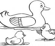 Coloriage et dessins gratuit Canard et ses canetons à imprimer