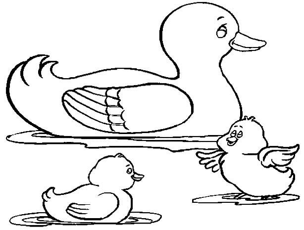Coloriage et dessins gratuits Canard et ses canetons à imprimer