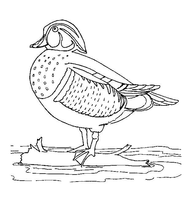 Coloriage et dessins gratuits Canard multicolore à imprimer