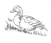 Coloriage Canard pour enfant