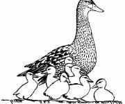 Coloriage et dessins gratuit Canard sauvage à imprimer