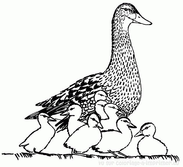 Coloriage et dessins gratuits Canard sauvage à imprimer