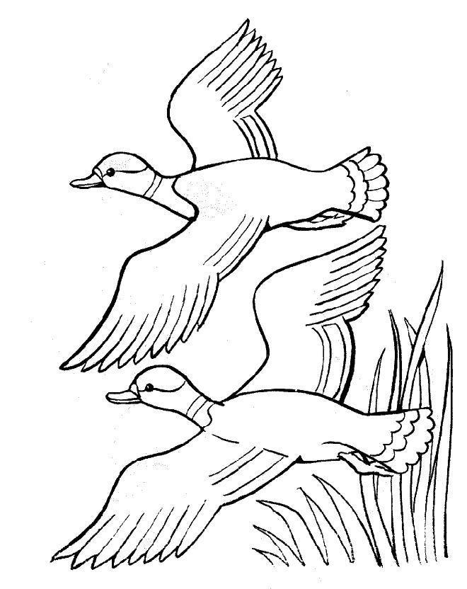 Coloriage et dessins gratuits Canards dessin à télécharger à imprimer