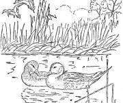 Coloriage Canards et la compagne