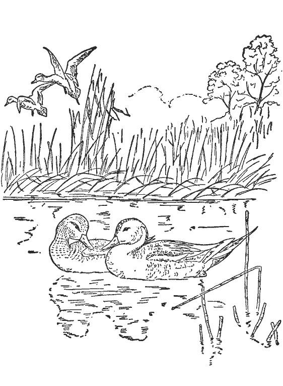 Coloriage et dessins gratuits Canards et la compagne à imprimer