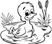 Coloriage et dessins gratuit Caneton dans la rivière à imprimer