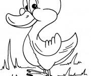 Coloriage et dessins gratuit Caneton en souriant à imprimer