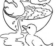 Coloriage Canetons jouent de l'eau