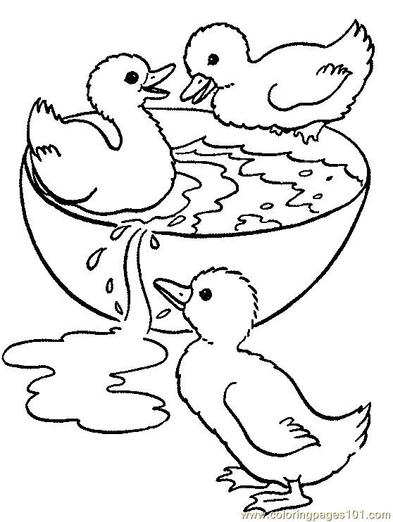 Coloriage et dessins gratuits Canetons jouent de l'eau à imprimer