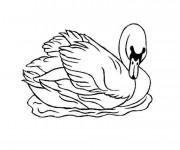 Coloriage Dessin de canard sauvage