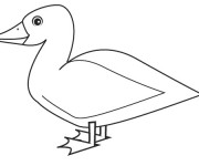 Coloriage Dessin très simple de Canard