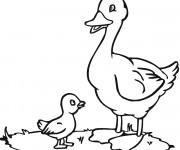 Coloriage et dessins gratuit Le caneton avec sa mère à imprimer