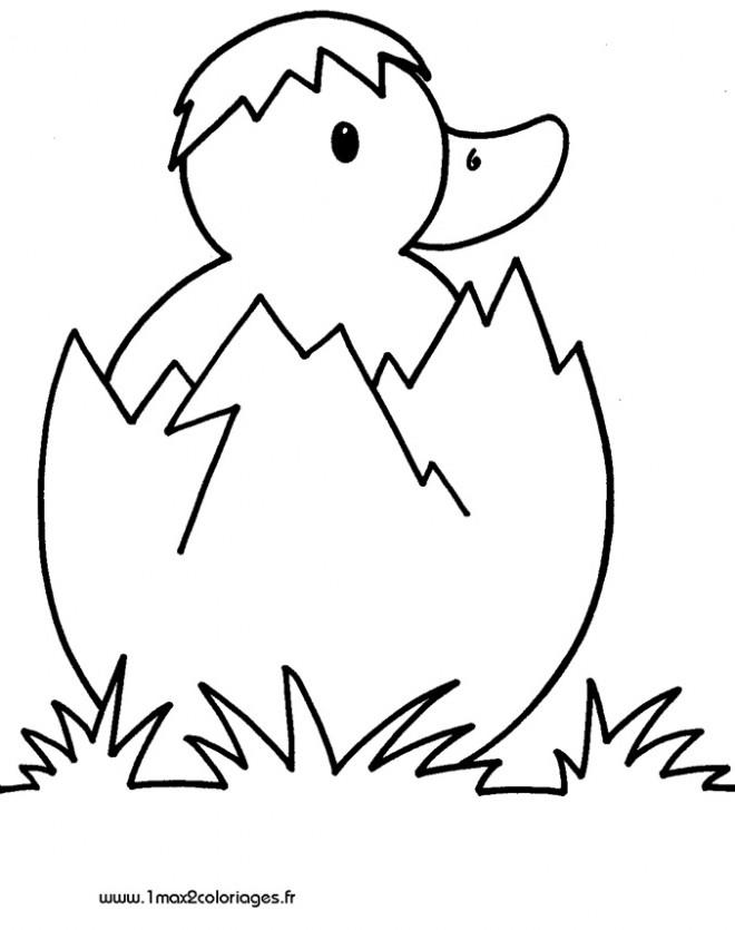 Coloriage Nouveau Né caneton dessin gratuit à imprimer
