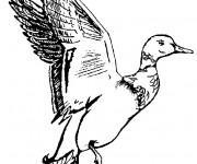 Coloriage Un canard qui va voler