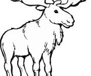 Coloriage Caribou