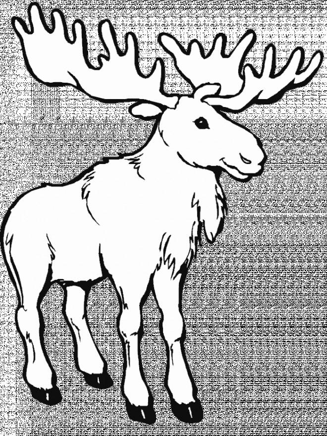 Coloriage et dessins gratuits Caribou adulte à imprimer