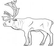 Coloriage et dessins gratuit Caribou adulte à télécharger à imprimer
