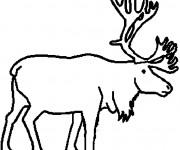 Coloriage et dessins gratuit Caribou au crayon à imprimer