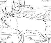Coloriage et dessins gratuit Caribou dans la forêt à imprimer