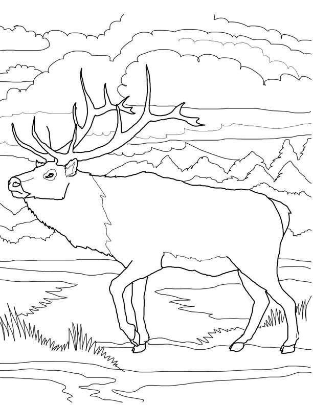Coloriage et dessins gratuits Caribou dans la forêt à imprimer