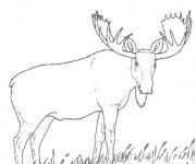 Coloriage et dessins gratuit Caribou dans la nature à imprimer