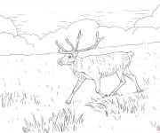Coloriage Caribou dans la plaine