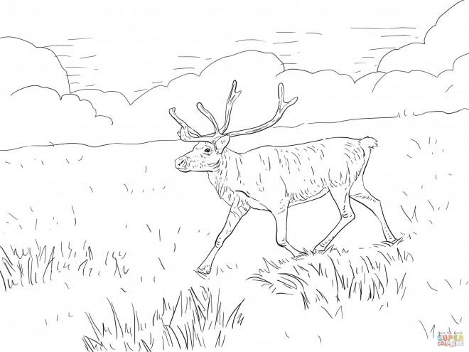 Coloriage et dessins gratuits Caribou dans la plaine à imprimer