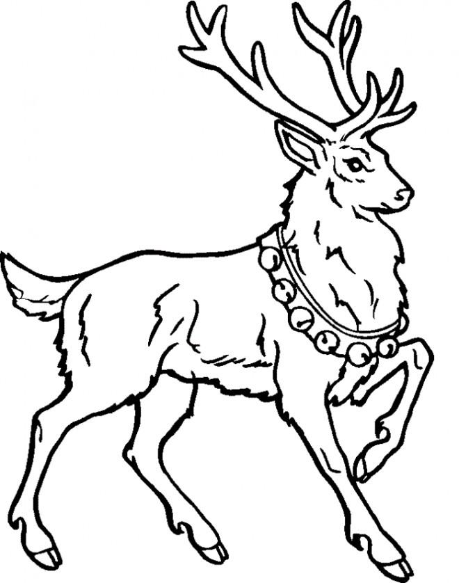 Coloriage et dessins gratuits Caribou de noël à imprimer
