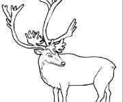 Coloriage et dessins gratuit Caribou en couleur à imprimer