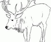 Coloriage Caribou en ligne