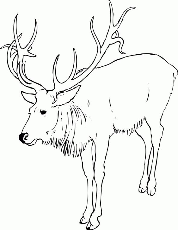 Coloriage et dessins gratuits Caribou en ligne à imprimer