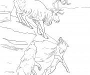 Coloriage Caribou et les loups
