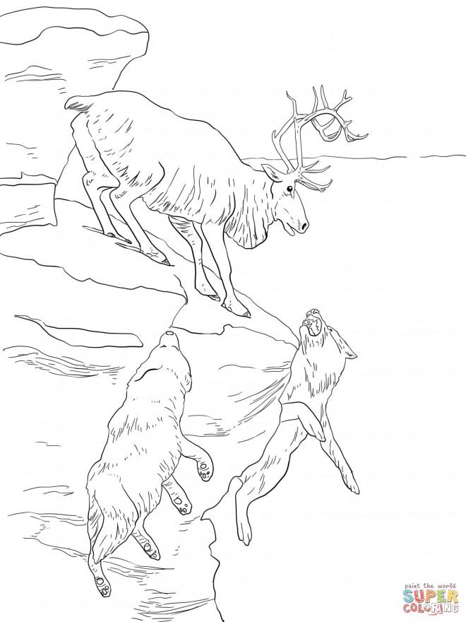 Coloriage et dessins gratuits Caribou et les loups à imprimer