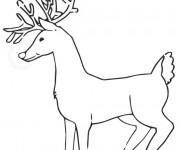 Coloriage Caribou européen