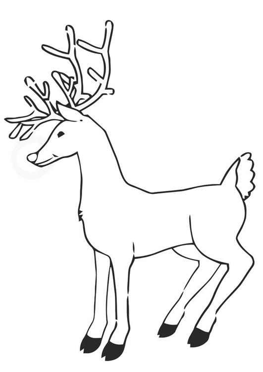Coloriage Caribou européen dessin gratuit à imprimer