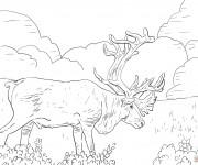 Coloriage et dessins gratuit Caribou géant à imprimer