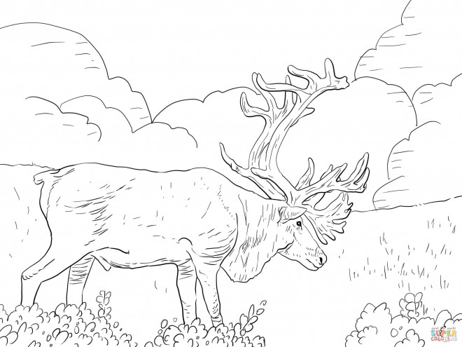 Coloriage et dessins gratuits Caribou géant à imprimer