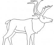 Coloriage Caribou levant sa tête