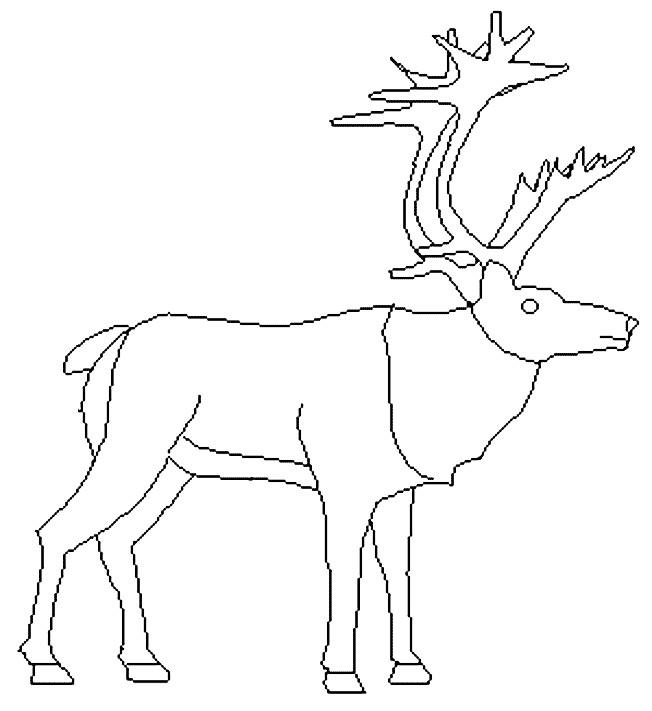Coloriage et dessins gratuits Caribou levant sa tête à imprimer