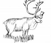 Coloriage et dessins gratuit Caribou noir et blanc à imprimer