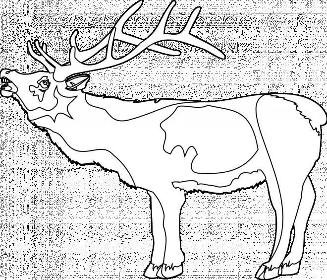 Coloriage et dessins gratuits Caribou ouvrant sa bouche à imprimer
