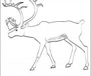 Coloriage et dessins gratuit Caribou pour enfant à imprimer