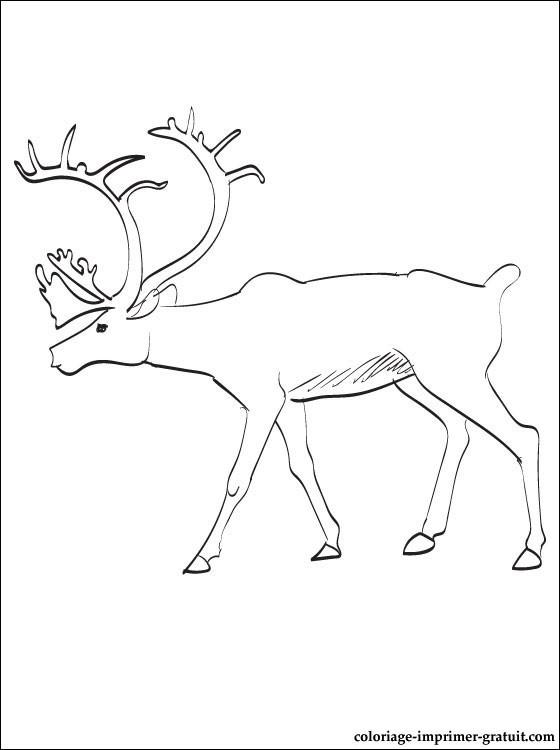 Coloriage et dessins gratuits Caribou pour enfant à imprimer